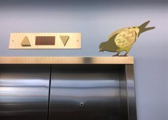 Elevator Pigeon