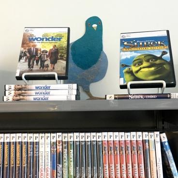 Peekaboo pigeon